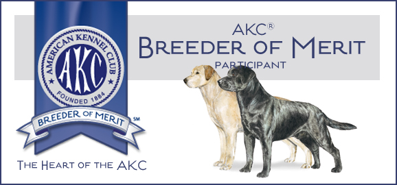 AKC Breeder of Merit participant badge logo