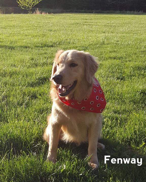 Fenway - testimonial