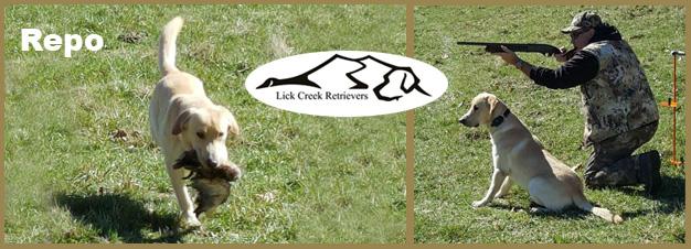 Lick creek kennels