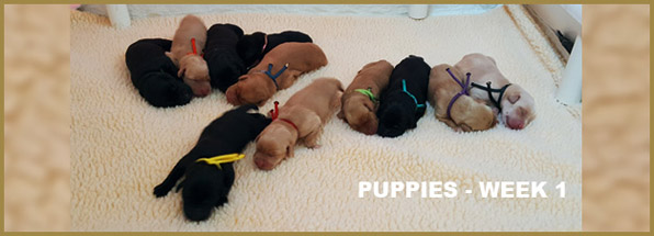 Vegas - Puppies Week 1